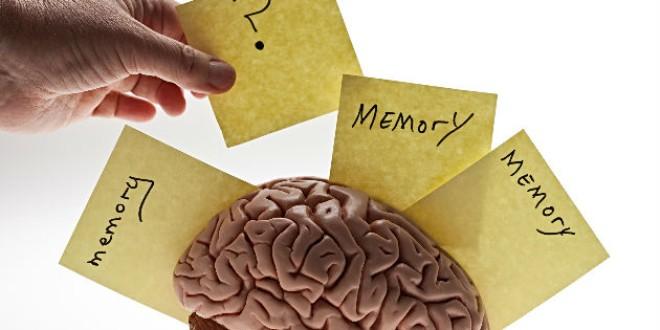 Colesterol, el arma secreta del cerebro para proteger la memoria