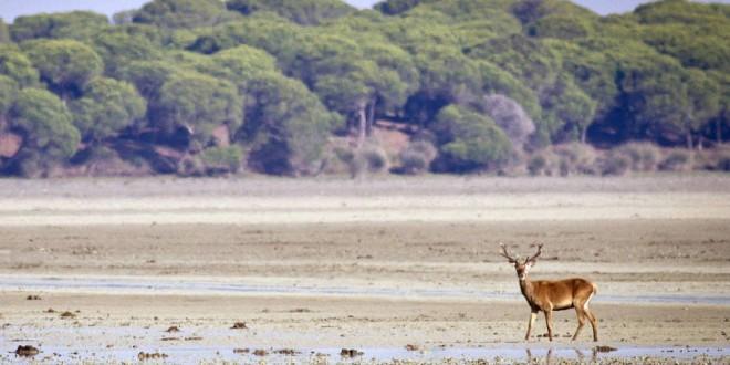 El riesgo sísmico y de contaminación de Doñana, las banderas contra Gas Natural