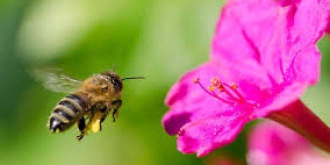 5 sencillos pasos para salvar a las abejas