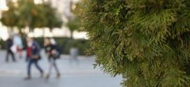 Mala primavera para los alérgicos: alto nivel de polen, contaminación y sequía