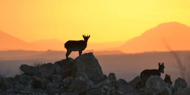 ATARFE: Las montesas colonizan Sierra Elvira