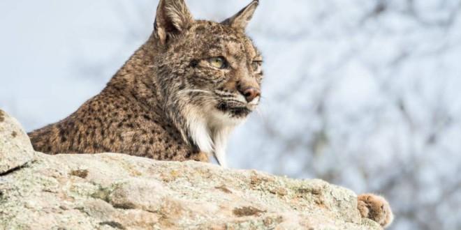 Un total de 6.000 especies ya están amenazadas de extinción en España