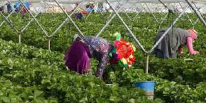 «A por fresas en condiciones de esclavitud» por Víctor Arrogante