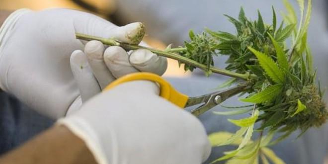 La ONU aplaza a final de año la decisión sobre el uso medicinal del cannabis por la falta de acuerdo