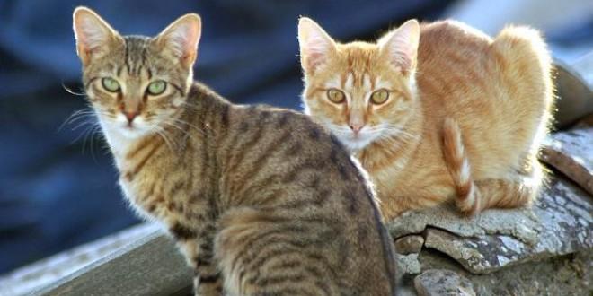 Diputación destina 65.000 euros a los ayuntamientos para la recogida y protección de animales domésticos