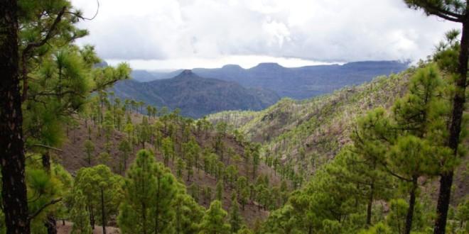 Diez bulos sobre los bosques que lastran el futuro del planeta