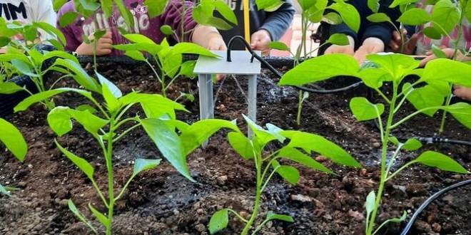 El colegio de Granada que sembró tomates y pimientos y recogió un proyecto educativo tecnológico