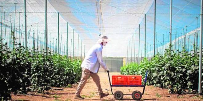 Empresarios agrícolas de Granada piden ayuda para traer a temporeros ante la falta de mano de obra local