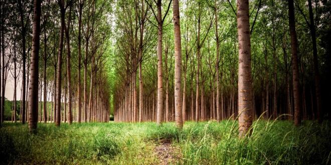 La Universidad de Granada coordina LIFE Wood for Future, un proyecto para recuperar las alamedas de la Vega de Granada